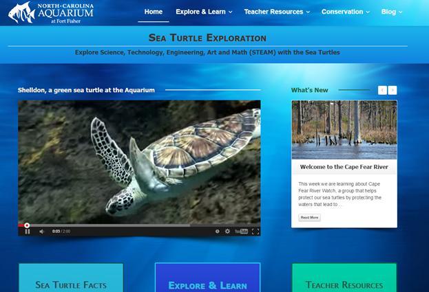 Sea Turtle Exploration